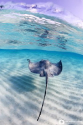 Dawn at the Stingray City... Solitude... by Nadya Kulagina 